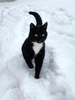 Bruce snö